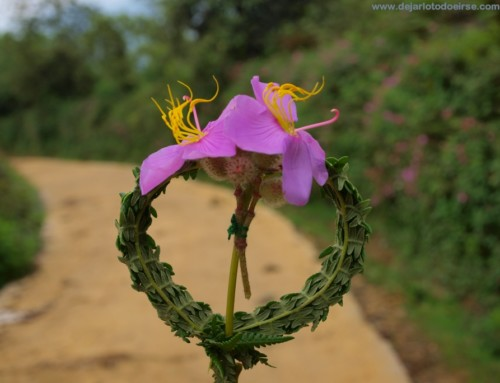 El amor en las tierras de Sapa