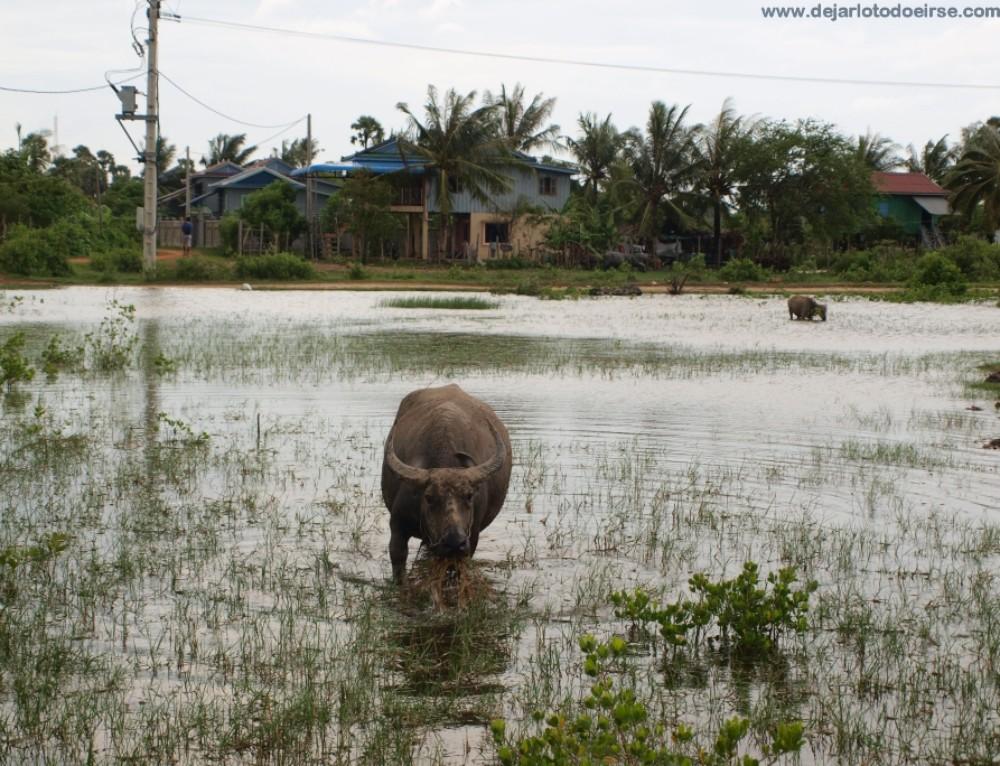 Unos días en Kampot y Kep, al sur de Camboya